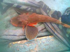 Fish ID Folder