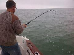 PB thornback  reeling In