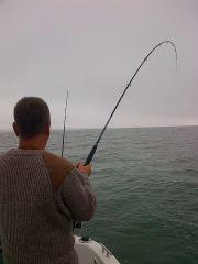 PB thornback  reeling In 2
