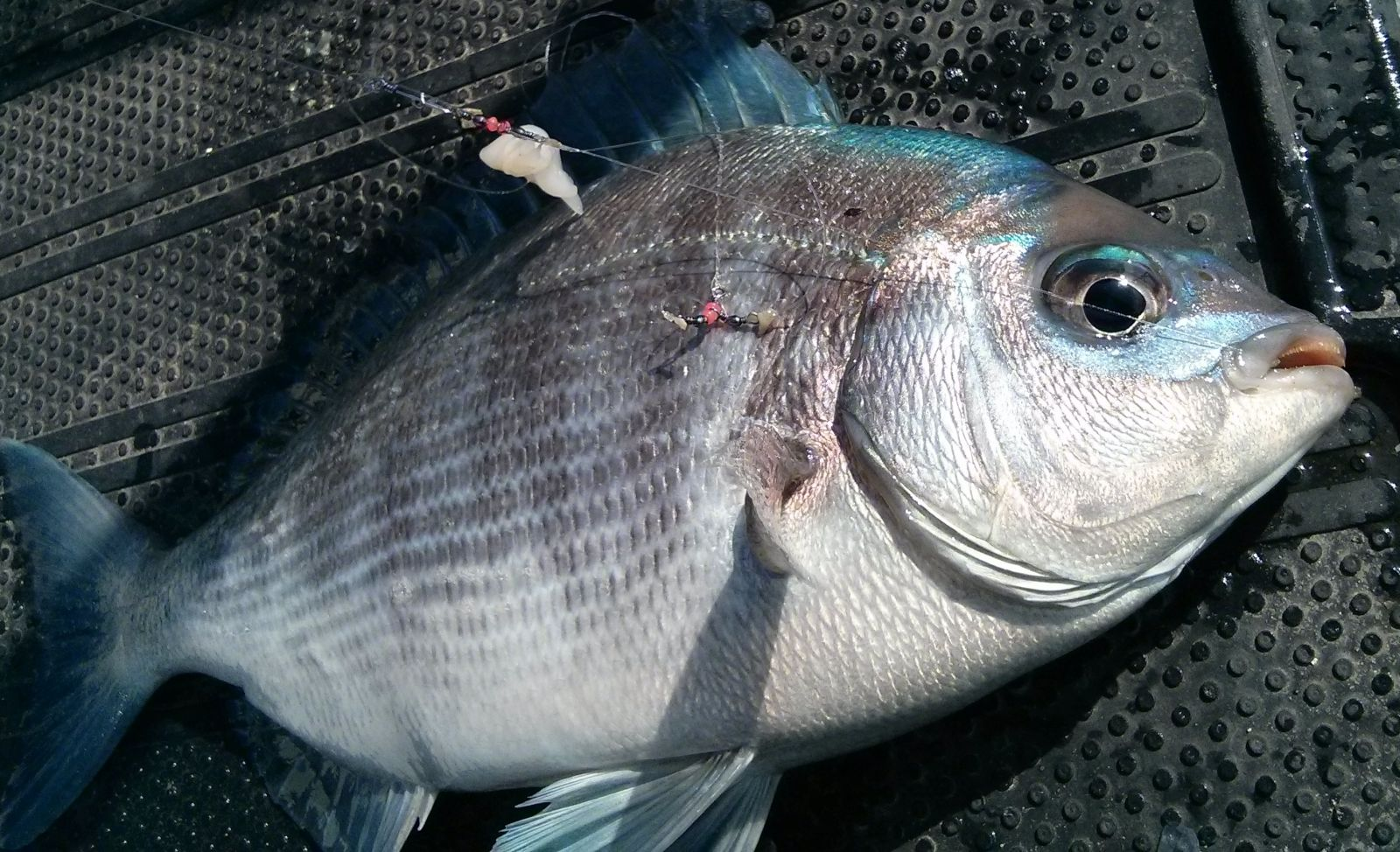 Bream April 17
