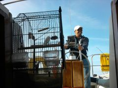 One Man And His (Ship's) Parrot