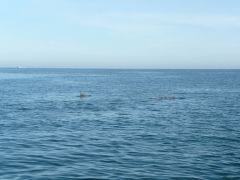 The Dolphins In The swash (13)