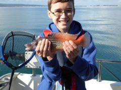 Brads Cuckoo Wrasse Junior Comp 2016